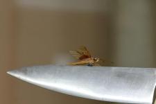 Фрагмент - нож и стрекоза