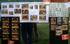 Левин Андрей, инструктор СПбФК,приготовил стенды о занятиях фехтованием